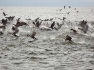 bird feeding frenzy