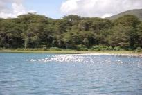 Flamingoes on Lake Oloidien