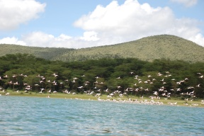 Flamingoes at Lake Oloidien